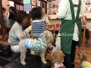 保護犬カフェ,保護猫,里親,里親募集,HOGOKEN