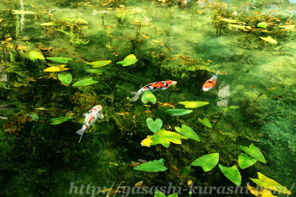 モネの池,名もなき池,奇跡の池,岐阜県関市,根道神社,インスタ映え
