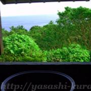 屋久島,世界遺産,縄文杉,縄文杉登山,雨,てぃーだ,五右衛門風呂