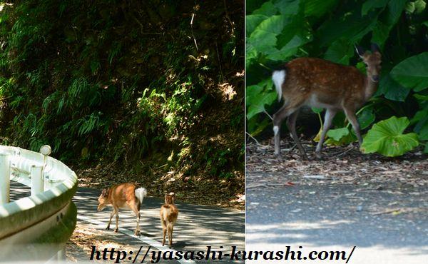 屋久島,大川の滝,屋久島ライン,緑の回廊