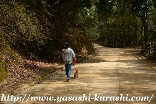 甲山森林公園,無料駐車場,散策,森林浴,ワンちゃんと散歩,広場