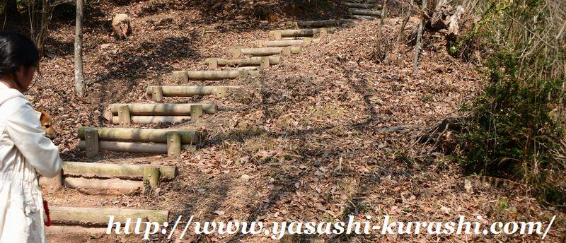 宝塚西谷の森公園,ワンちゃん連れ公園,宝塚,ハイキング,柴犬,赤柴,散歩デビュー