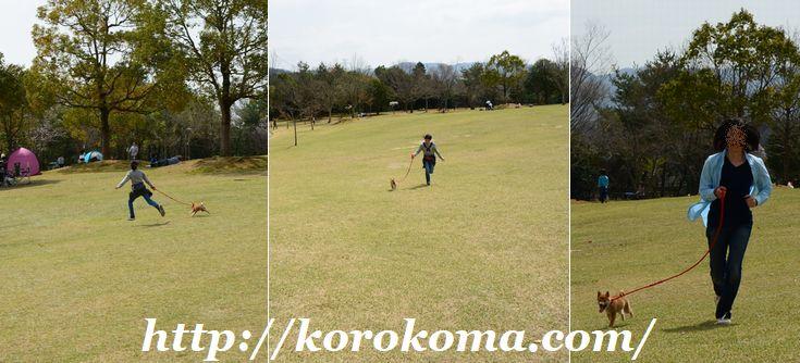 一庫公園,兵庫の公園,無料の公園,無料の遊び場,水遊び,芝生広場,知明湖,丘の駐車場