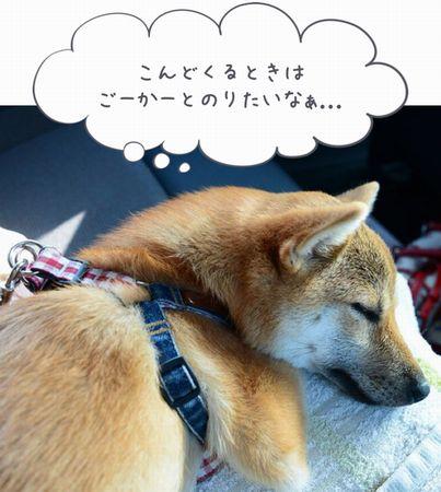 兵庫ドッグラン,無料のドッグラン,関西のドッグラン,神戸フルーツフラワーパーク,わんこと一緒にゴーカート