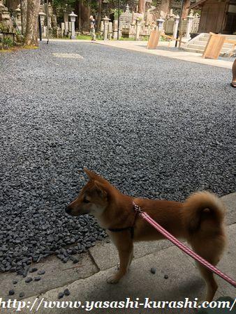 高野山,犬連れOK,ワンコ連れ,ゴン,ペットと一緒に,ワンコと一緒