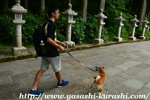 高野山,犬連れOK,ワンコ連れ,ゴン,ペットと一緒に,ワンコと一緒,金剛峯寺,壇上伽藍