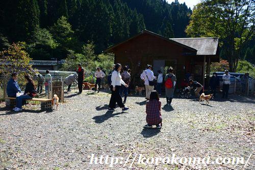 柴犬専用ドッグラン,柴犬ドッグラン,タロサク,tarosaku,滋賀ドッグラン,柴犬だらけ