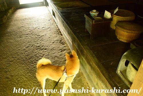 宝塚自然の家,ワンちゃんとお出かけ,兵庫