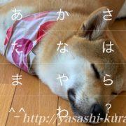Simeji,しめじ,スマホ入力アプリ