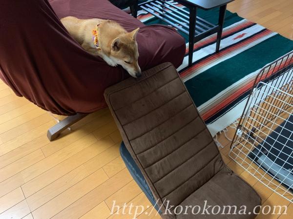 ペット用スロープ,ペット用ステップ,段差,シニア,パピー,子犬