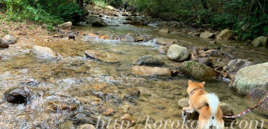 西宮,川遊び,キレイ,犬連れ,わんこok,宝塚,無料,水遊び