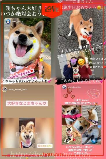 こま誕生日,淡路正菊荘,柴犬