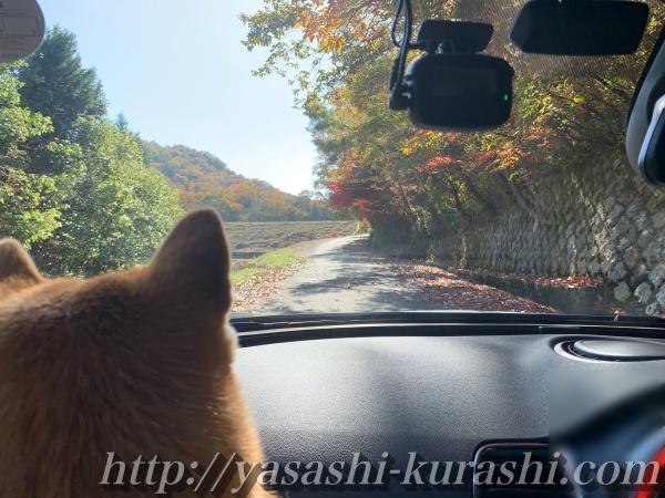 犬と一緒にハイキング,丸山湿原,宝塚,登山